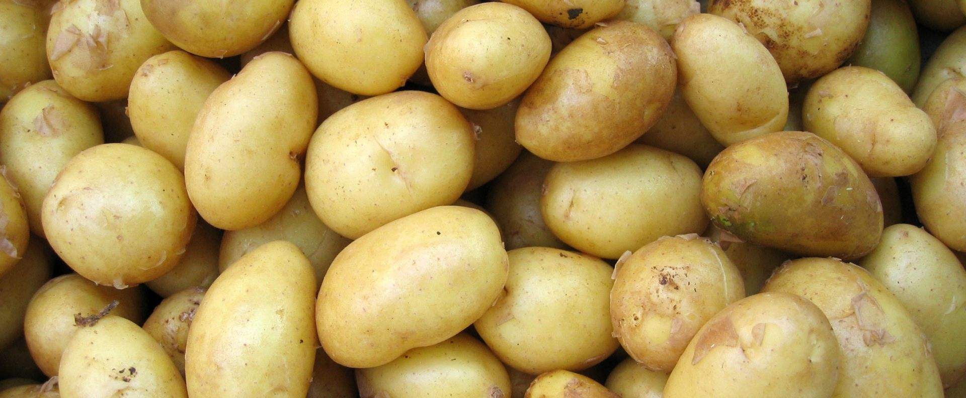 Smart Potato ontwikkeld door studenten HBO-ICT